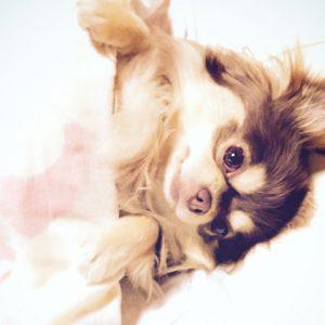 犬や猫の平均寿命が数年で倍にまで!?ペットにも長寿祝いの波が来ています。